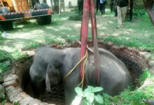 Photo of کنویں میں گرنے والے ہاتھی کو 14 گھنٹوں کے آپریشن کے بعد بچا لیا گیا